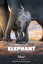 Watch HD Movie Elephant
