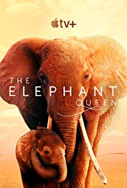 Watch Movie The Elephant Queen