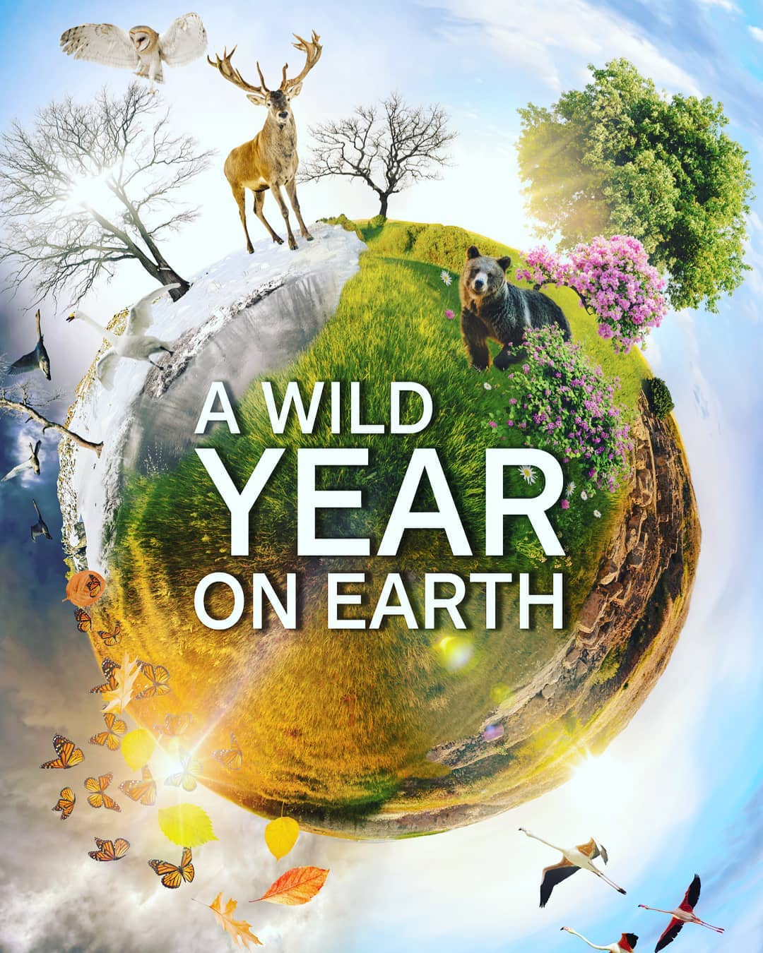 A Wild Year on Earth Season 1 funtvshow