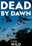 Watch Series Dead by Dawn Season 1