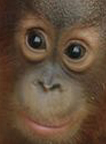 Meet the Orangutans Season 1 123streams