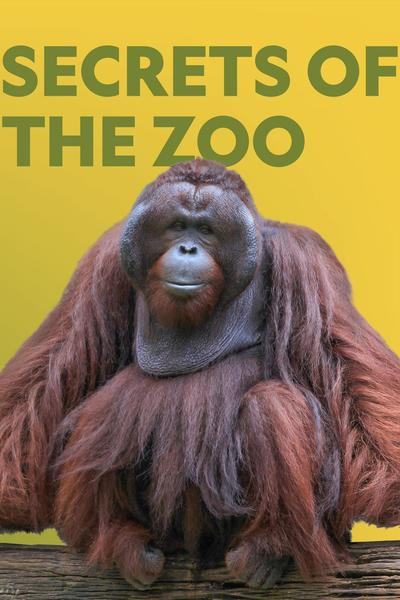 Secrets of the Zoo Season 4