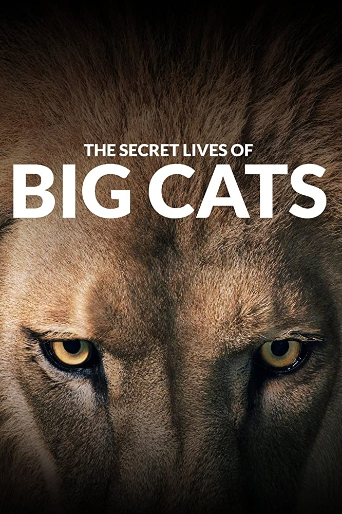 The Secret Lives Of Big Cats Season 1 funtvshow